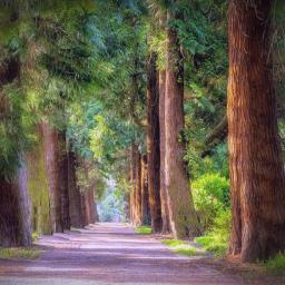 freetoedit remix remixit landscape forest