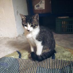 cute süß schön photography cat katze babykatze beutiful sweet cool weiß braun schwarz nature drinnen name kater