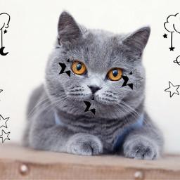 star stars cat starcat chalange freetoedit starlightstarbright