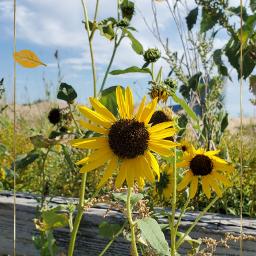 nature sunnyclouds summervibes picoftheday naturesbeauty freetoedit