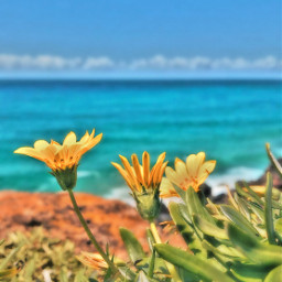 freetoedit wallpaperedit aesthetic yellow green blue saturationeffect leaves flower ocean cliff