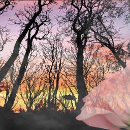 freetoedit nature aestheticnature rose sun