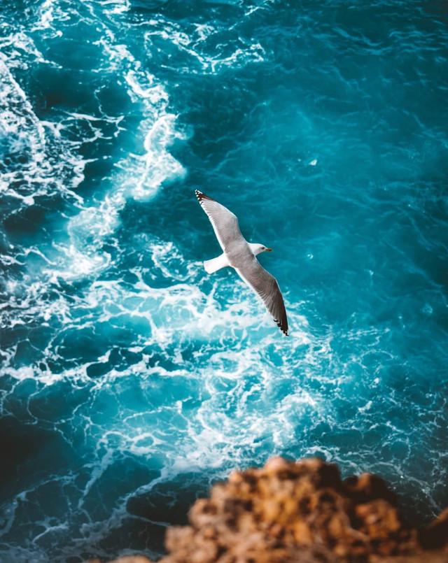 #nature #ontheedge of the #cliff #lookingdown #water #seawater #wavescrashing on #rocks #seafoam #seagullinflight #summertime #beachvibes #foregroundblured #highangleshot #naturephotography                                                                                   #freetoedit