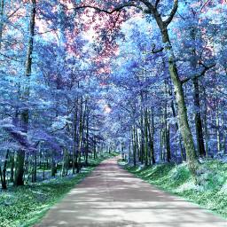 freetoedit picsart vipshoutout picsartphoto nature naturephotography forest winter winterforest colors colorsplash dailytag challenge gallery remix remixit remixed