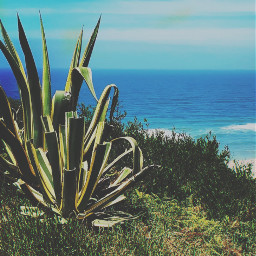 nature cliffwalk wildplants groundplants cactus seaview horizon blueskyandclouds summertime hotweather beachvibes naturephotography freetoedit