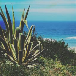 nature cliffwalk wildplants groundplants cactus seaview horizon blueskyandclouds summertime hotweather beachvibes naturephotography freetoedit