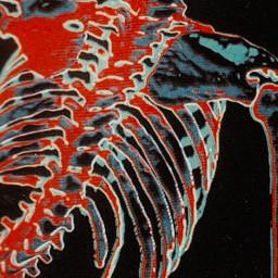 freetoedit skeleton dark halloween emo skull bone bones creepy scary night