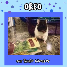 blue hamster oreo pet