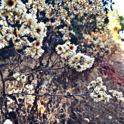 flowerpower hikelife caligirl hikingadventures nature beauty seeme mood love mymind myeye bchez photography edit
