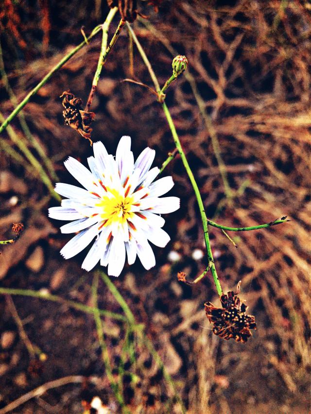 #blossom #flowerpower #hikelife #caligirl #hikingadventures #nature #beauty #mood #love #seeme #mymind #myeye #bchez #photography #edit