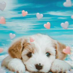 dog hearts clouds sweet freetoedit