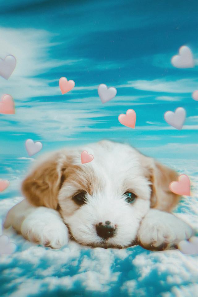 #dog #hearts #clouds #sweet #freetoedit