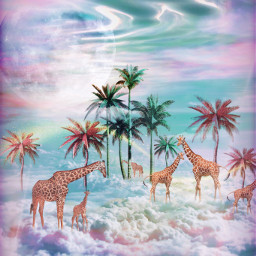 freetoedit fantasy surreal inthesky giraffe