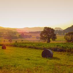 freetoedit meadow nature myphoto landscape
