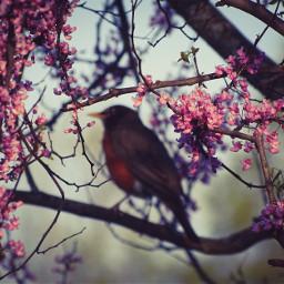 freetoedit bird flowers blur selectivefocus spring depthoffocus naturalframe