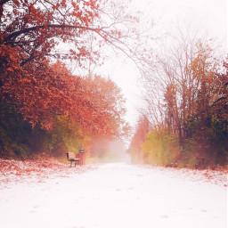 freetoedit fall snow park path colors crisp