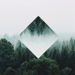 nature forest quite silence clouds dark surreal editing photoedit mist fog creepy confused calm deep deepforest square turbot picsart myedit madewithpicsart heypicsart picoftheday bestoftheday aesthetic
