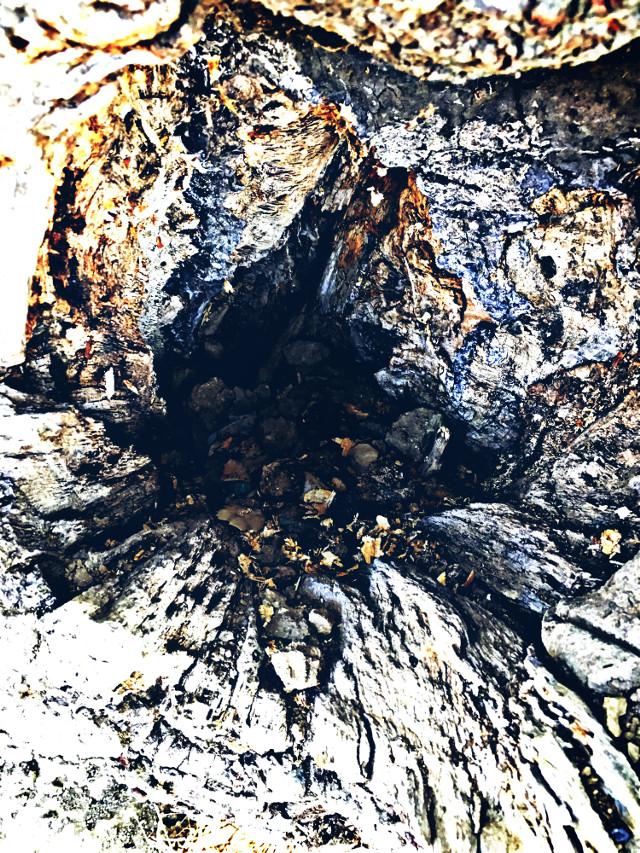 #tree #treehole #distressed #hikelife #caligirl #hikingadventures #nature #beauty #seeme #mood #mymind #myeye #bchez #photography #edit