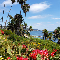 freetoedit beach summerday california ocean lagunabeach flowers cactus palmtrees scenic view destination vacation summer myphotography