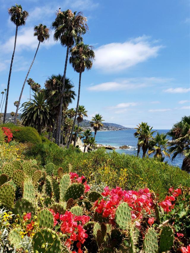 #freetoedit #beach #summerday #california #ocean #lagunabeach #flowers #cactus #palmtrees #scenic #view #destination #vacation #summer #myphotography