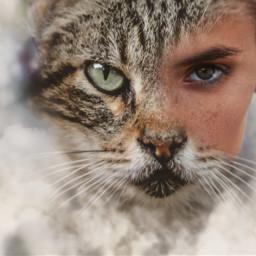 freetoedit animalspirit animals feline challengeoftheday ecmyanimalalterego
