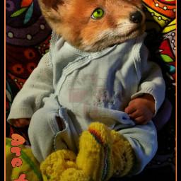 baby fox babyfox cutefox cute ecmyanimalalterego
