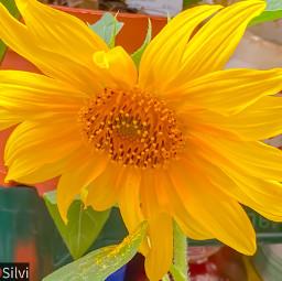 yellowphotography