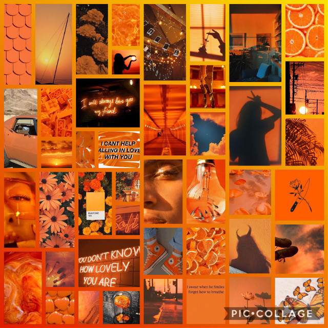 orange aesthetic background  ☄️🧡📙🌇🍯  im going to be posting all of my aesthetic/complex (kinda) backgrounds so, sorry for the spam x  TAGLIST:  [💚] @honia666 [🥑] @ily_billie [💚] @ deepdarksecret  [🥑] @finnfreakingwolfhard  [💚] @abstractstar [🥑] @_-harleym17-_ [💚] @haloanek08 [🥑] @sunshine_19867 [💚] @lilly_ [🥑] @meme2692 [💚] @multigrande26 [🥑] @-jenniferlawrence- [💚] @strangereilishedits [🥑] @sscoopstroop [💚] @flying-avacados-_- [🥑] @caitlinsmh [💚] @fot_deft [🥑] @im_luci_bs [💚] @acarsonnnn [🥑] @its_addy_may [💚] @hxneymills- [🥑] @multifandomsparkles [💚] @marta_st011 [🥑] @ahoylosers- [💚] @scftmills_ [🥑] @harrypotter5762 [💚] @minu_tumblr [🥑] @millswatermelon [💚] @cvpidbutera [🥑] @disnxy77 [💚] @jahzxra [🥑] @qtglcss [💚] @pixiefqiry- [🥑] @mills__eleven__011 [💚] @super-fandom [🥑] @xtomxhollandx [💚] @hqneytears [🥑] @hiddleston_lover [💚] @madmax1127 [🥑] @awhabby- [💚] @awhquotes   dm [🦋] to join the taglist  dm [🌻] if you have changed your username   HASHTAGS: #orange #orangeaesthetic #aesthetic #orangeaesthetics #orangeaestheticbackground #orangeaestheticwallpaper #orangebackground #orangewallpaper #brightaesthetic #cuteaesthetic #happy #warm #warmaesthetic #bright #brightorange #softorange #lightorange #lightaesthetic #wallpaper #background #freetoedit