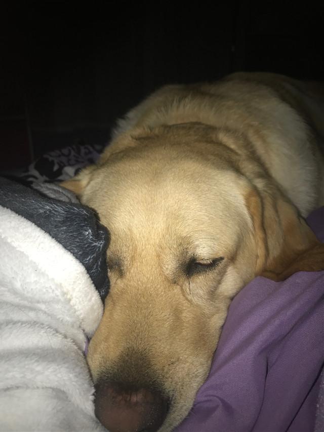 #sleeping #sleepingdog #3am #tired