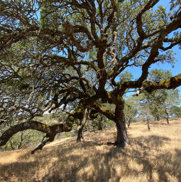 freetoedit tree background nature