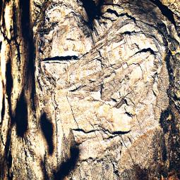treetrunk woodgrain distressed hikelife caligirl hikingadventures nature beauty mood mymind myeye bchez photography edit