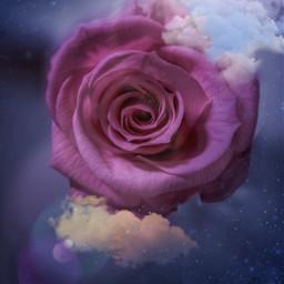 fantasygirl flowerslovers flowerselfie floweraesthetic pinkroses pinkrosesaesthetic freetoedit