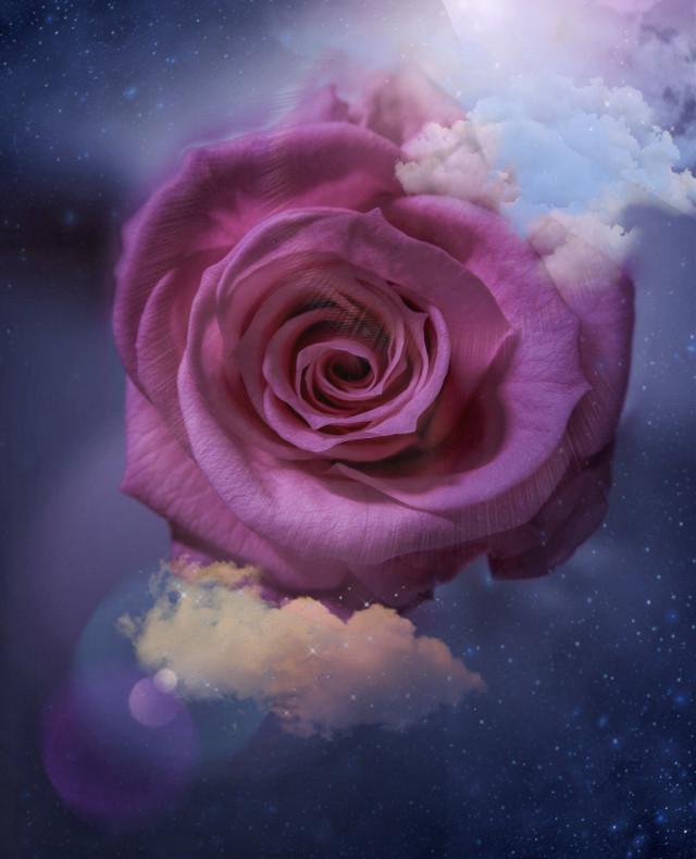 #fantasygirl #flowerslovers #flowerselfie #floweraesthetic #pinkroses #pinkrosesaesthetic #freetoedit