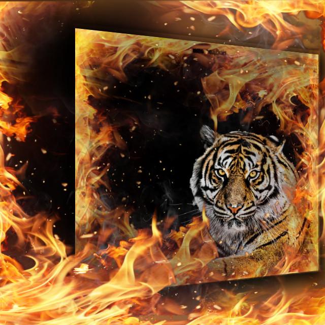 #freetoedit #tiger #endangered #animals #fire