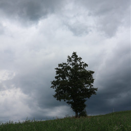 freetoedit myphotography landscape nature tree grass clouds cloudysky storm