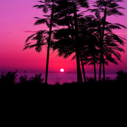 freetoedit mastershoutout sunset pinksunset pink silhouette trees myedit madewithpicsart picsarteffects curvestool fittool