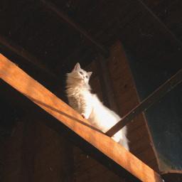 cat gato photography catphotography catphotos freetoedit
