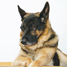 freetoedit patsandanimals doglove mydog❤ boringmoments mydog