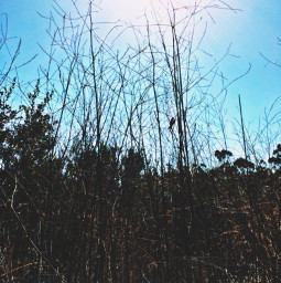 sunbeams lookup tallgrass hikelife caligirl hikingadventures nature beauty seeme mood mymind myeye bchez photography edit