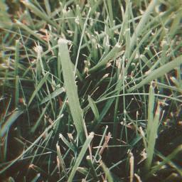 grass minnesota summer nature belarus thailand prayformexico prayforbelarus prayforthailand blm photography myphoto freetoedit