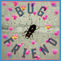 freetoedit bug beetle friend bugfriend nature goodvibes