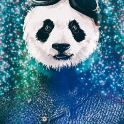 freetoedit panda🐼 pandalove challenge voteforme animallover lightseffect panda ecmyanimalalterego myanimalalterego
