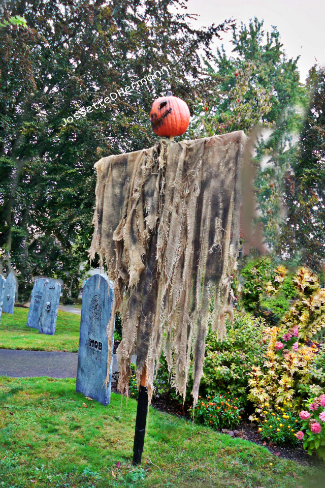 Halloween is coming 🎃🎃🎃 NO DELETE  MY WATER MARK PLEASE if u wish use my  photoartstock pls contact me thanks  #jossettedhermanniphotography   #halloween  #halloweeniscoming