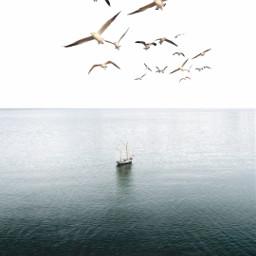 freetoedit minimalism birds ocean myedit simple araceliss