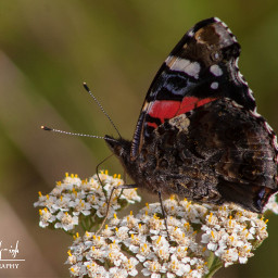 freetoedit photography butterfly nature summer
