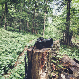 sonyalpha photography hiking mygear sony stump googlepixel momentlens momentwide