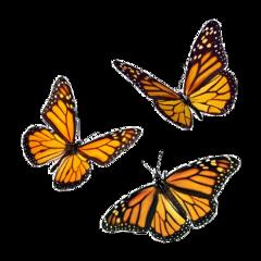 freetoedit butterfly poland art summer photography