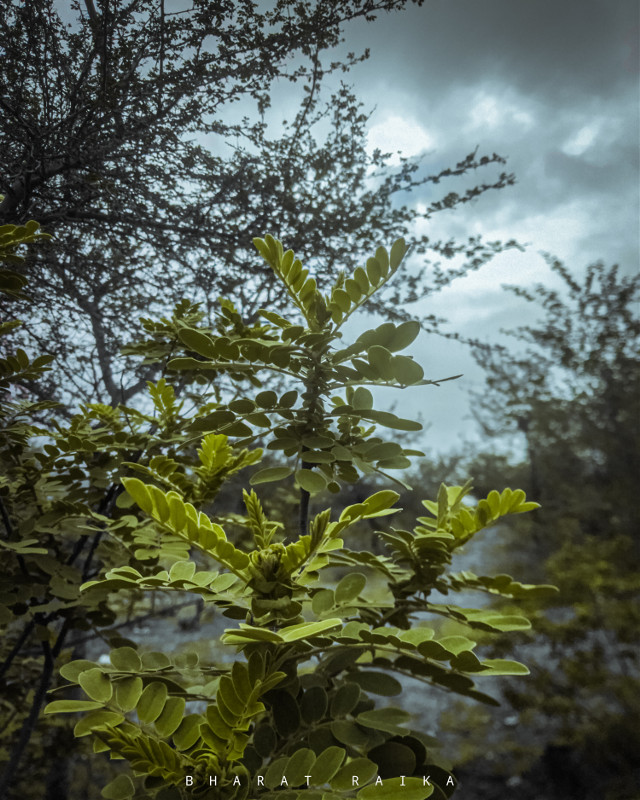 #sharpen #photography #photooftheday #photographer #plants #peace