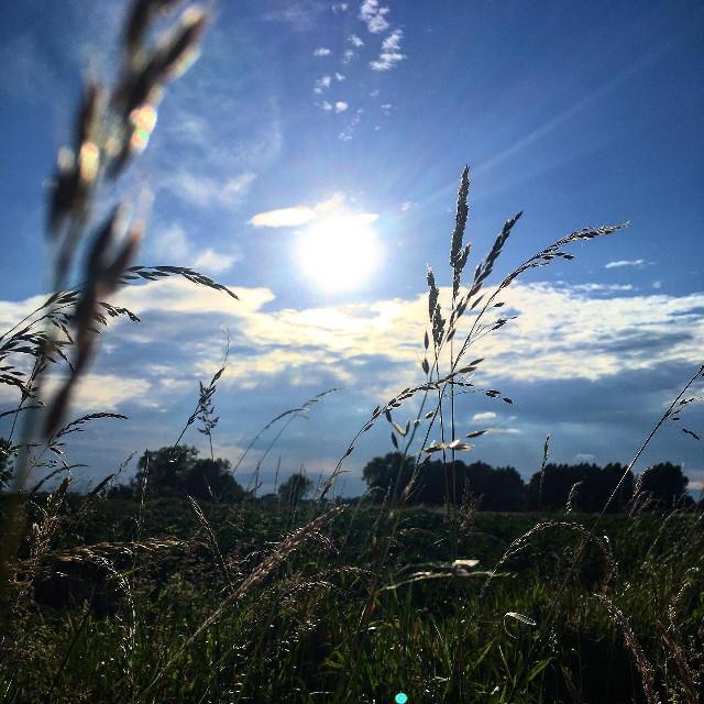 #sky #cloud #nature #naturallandscape #grass #vegetation #daytime #sunlight #light #morning #wilderness #grassfamily #tree #plant #atmosphere #sun #horizon #mountain #spring #backlighting #summer #evening #meadow #meteorologicalphenomenon #photography #branch #phragmites #grassland #plantstem #wildflower