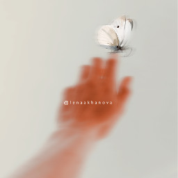 freetoedit magic moment hand butterfly
